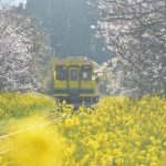 いすみ酒BAR(バール)列車