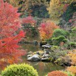 成田山公園紅葉まつり 2020