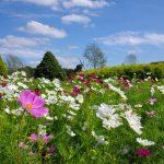 ふなばしアンデルセン公園 花の城ゾーン