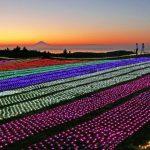 マザー牧場イルミネーション2020-2021「光の花園」