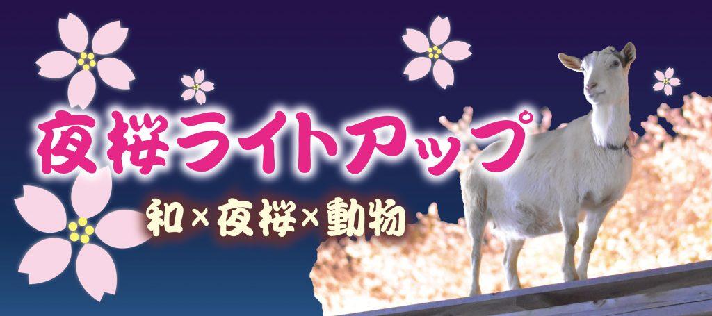 成田ゆめ牧場 夜桜ライトアップ