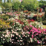 スプリングフェスティバル「It's so in Bloom!」